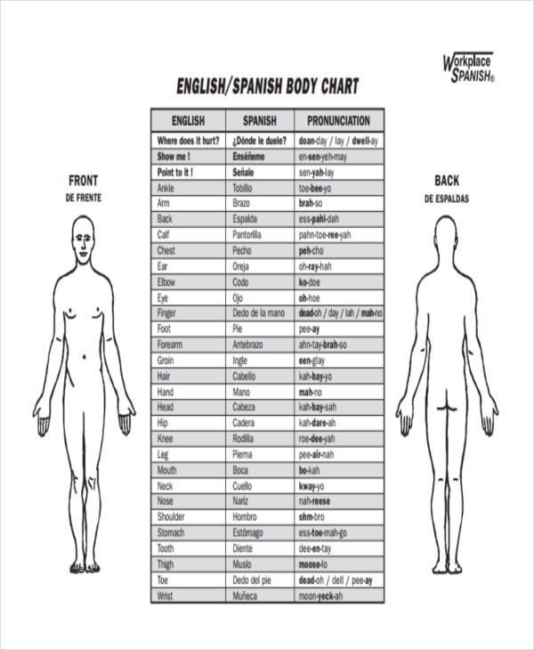 spanish body chart