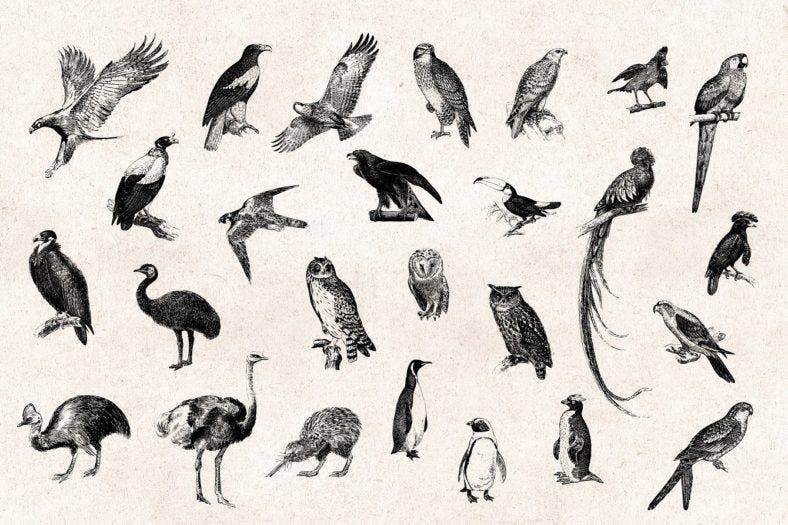 Engraved Vintage Bird Designs