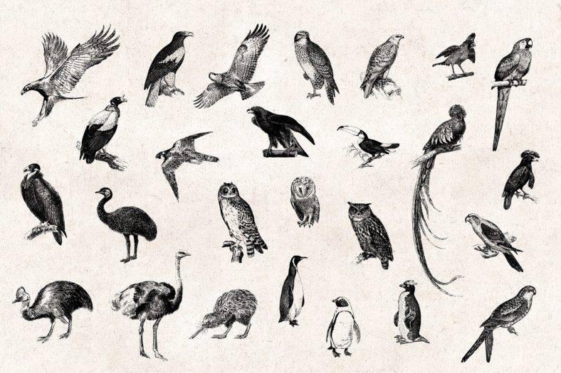 Engraved Vintage Bird Designs