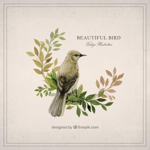 Watercolor Vintage Bird Design