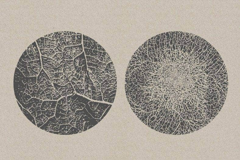 Organic Texture Set
