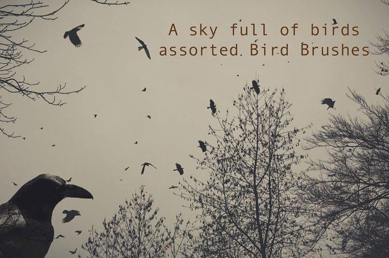 sky-fulll-of-birds