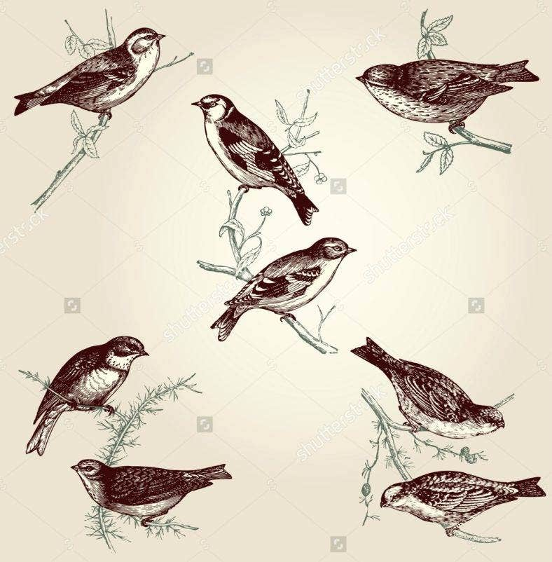 25  vintage bird illustration designs