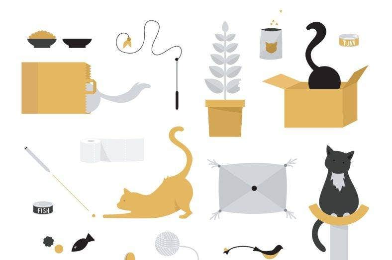 cats wth cat stuff 788x524