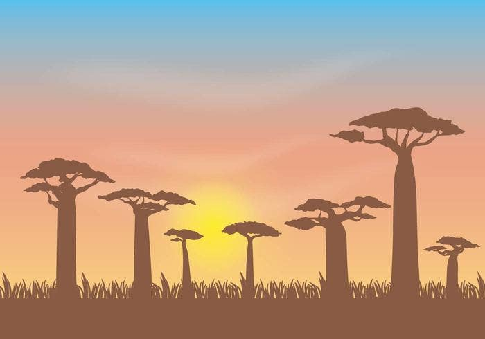 free-baobab-vector-illustration