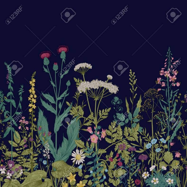 Vector seamless floral border. Herbs and wild flowers. Botanical Illustration engraving style.