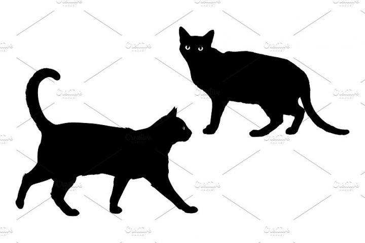 black-cat-05