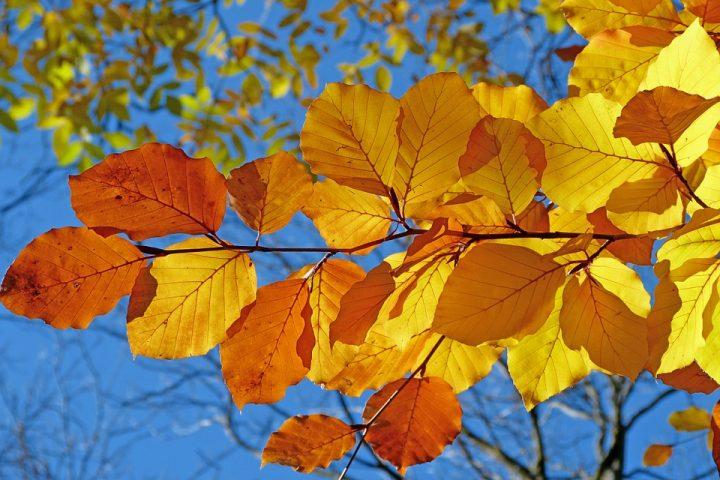 foliage 539413