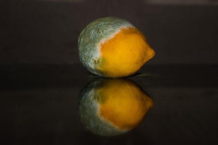 lemon 2146956