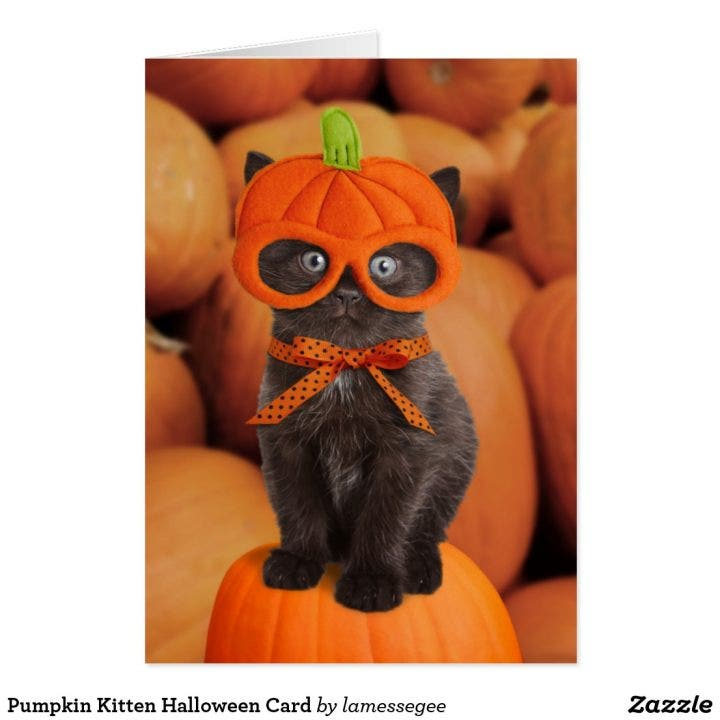 pumpkin_kitten_halloween_card-r051be55fbe9d4e66b652a67bcfa91955_xvuat_8byvr_1024