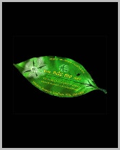 creative-green-leaf-business-card