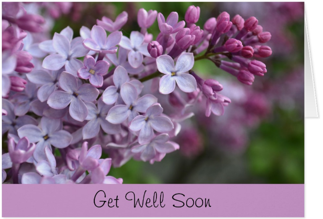 lilac get well soon card