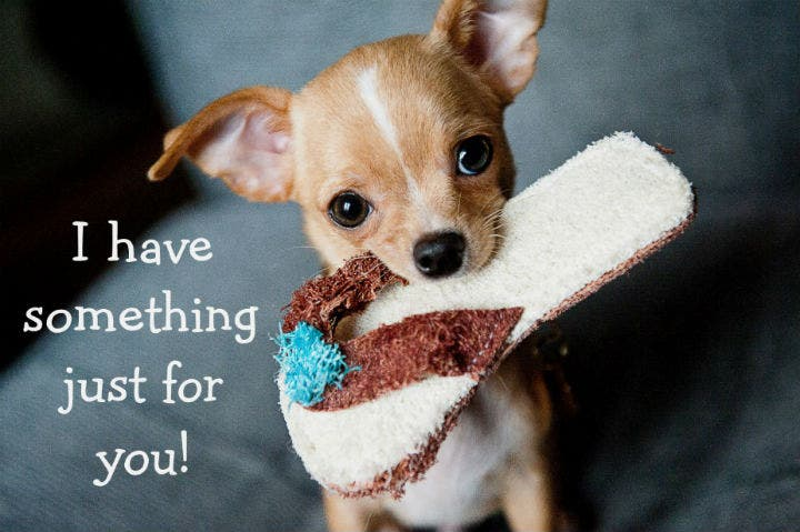 adorable-chihuahua-dog-birthday-card-template