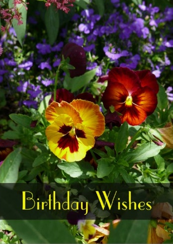 pansy-birthday-wishes-card