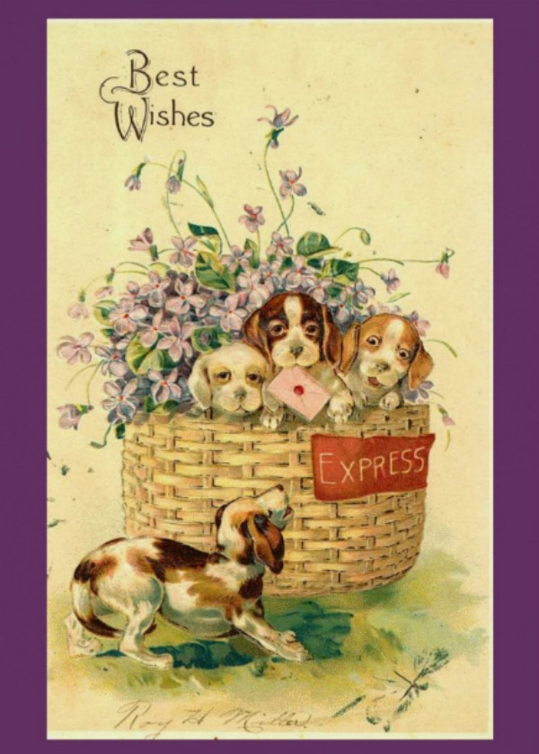 Puppy Best Wishes Card