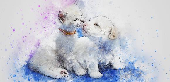kittybirthday