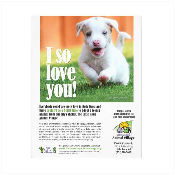 Adoption Animal Flyer Design
