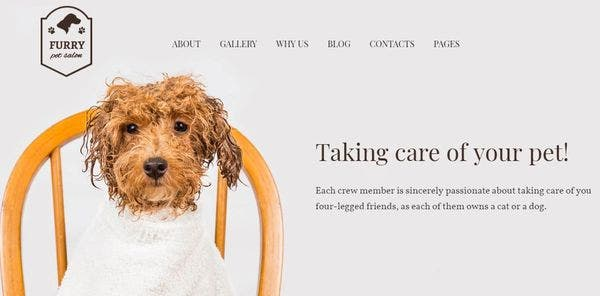 Furry – 24/7 Customer Support WordPress theme