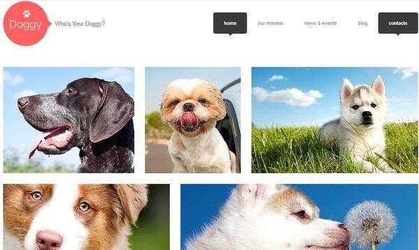 Dog – Fully Editable WordPress theme