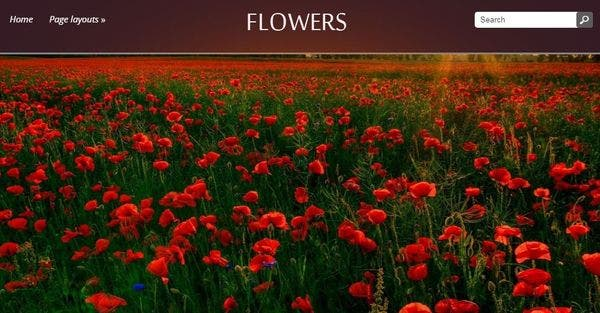 Flowers: Multicoloured enabled WordPress Theme