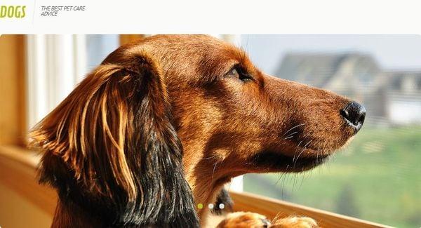 Dog – HTML Compatible WordPress theme