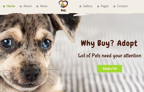 Pet World – MailChimp Integrated WordPress theme