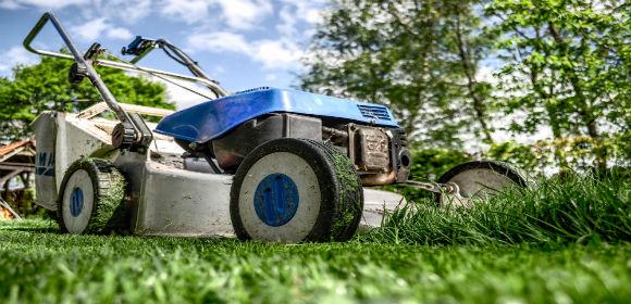 gardengardeninggrass589